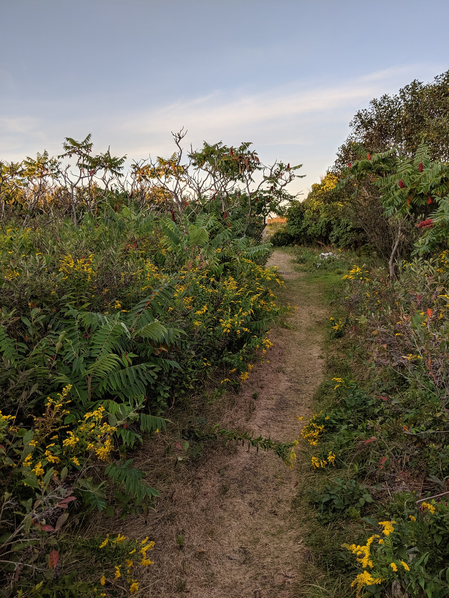A trail through some flowers and bushes